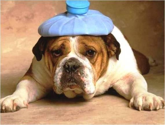 divertida imagen de perro con bolsa de agua en la cabeza