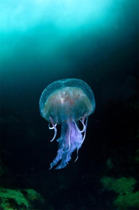 Fotografías mundo marino: imagen medusa