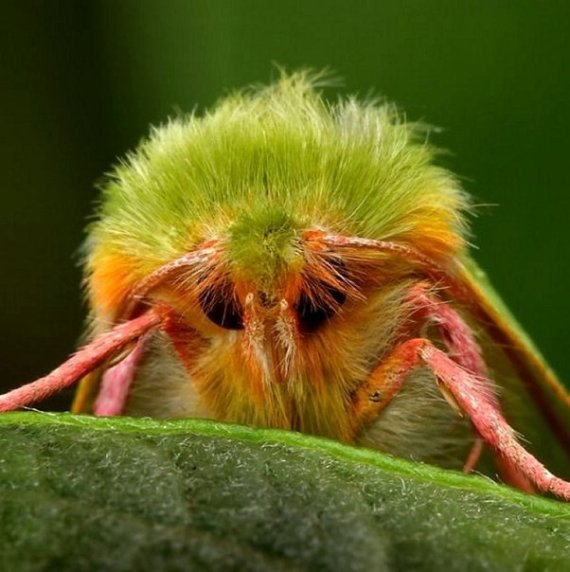 Imagenes de Bichitos: insecto raro