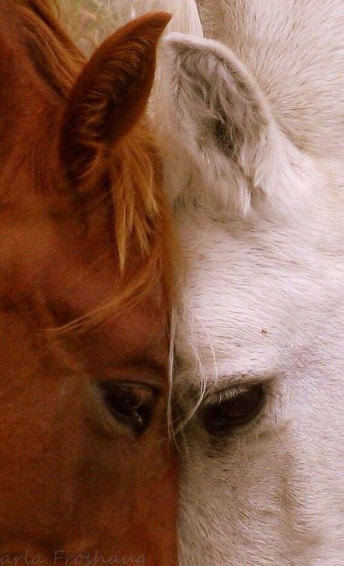 Hermosa fotografia de rostro de caballo