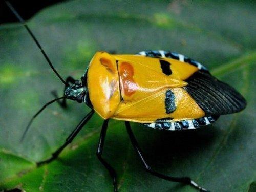 imagenes de insectos - Insecto de colorido color amarillo