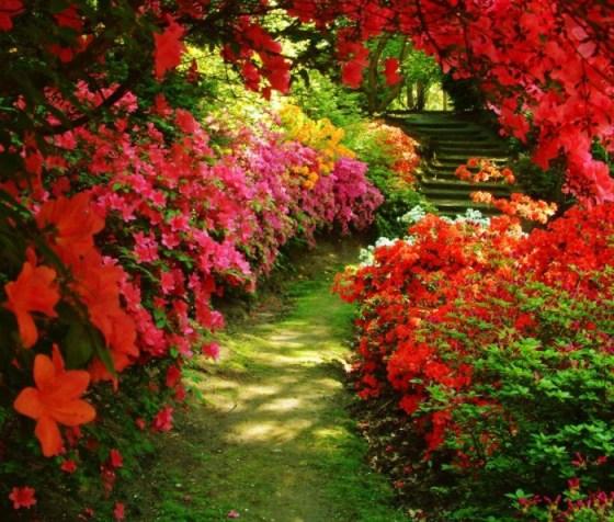 Fondo de pantalla: camino florido