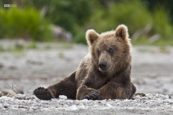 Fotografias de osos