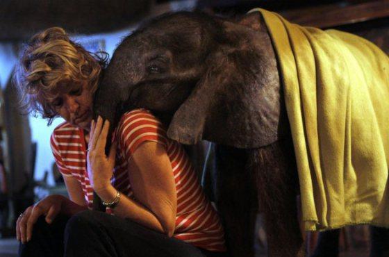 Tierna imagen de elefante bebe - elefantito