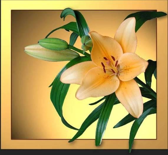 Imagenes wallpaper flor