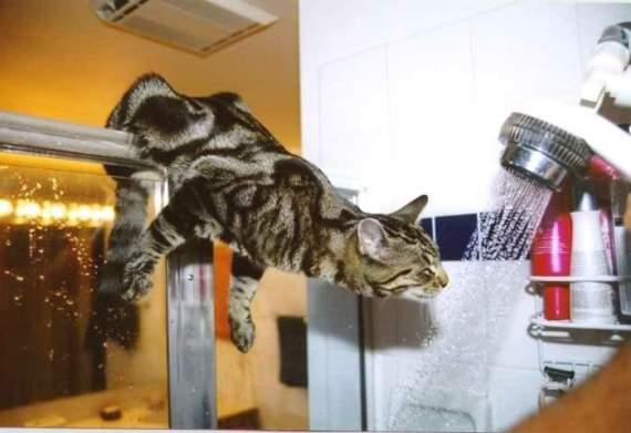 imagenes divertidas de gatos en la ducha