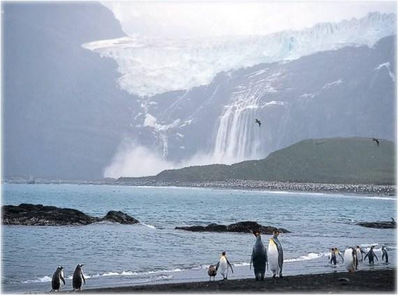 fondo de pantalla glacier y pinguinos
