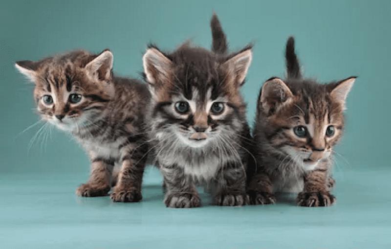 تفسير رؤية القطط في المنام لإبن سيرين لماذا تشكل هاجسا