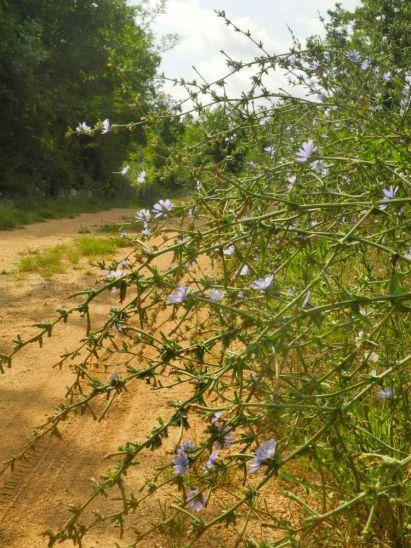 Pflanzen am Wegesrand