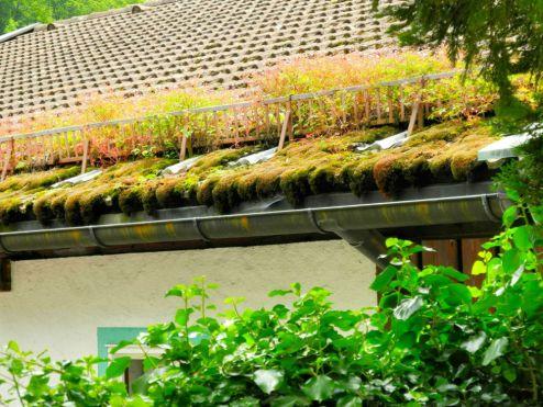 Bewachsenes Dach
