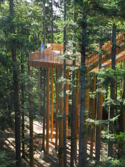 Die Waldinsel mit Lehrstationen