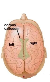 Creative Power of The Brain - right-left brain
