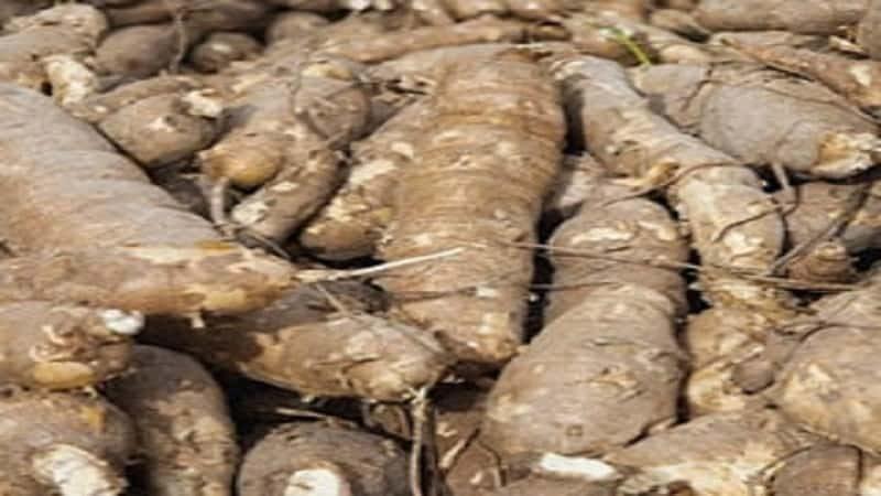Business Plan on Cassava Processing 1
