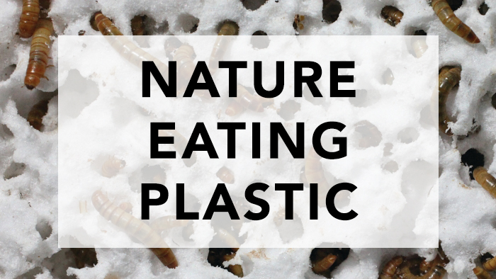 Nature Eating Plastic