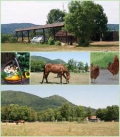 kmetija-cesenj-