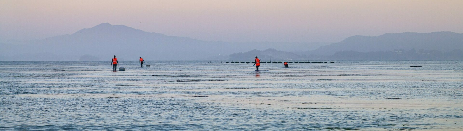 Nature-based infrastructure experiment at Giant Marsh, oyster reefs in distance. Photo: Jak Wonderly
