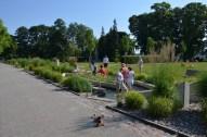 Feldberg Kneippbecken im Kurpark im Sommer