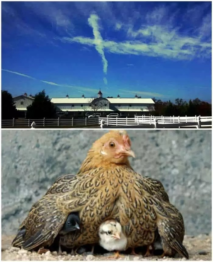 Cloud formation that looks like a cross over Knights' former residence & mother hen with her chicks