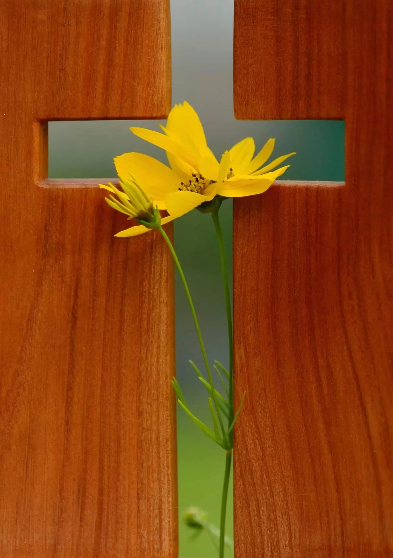 cross with yellow flower