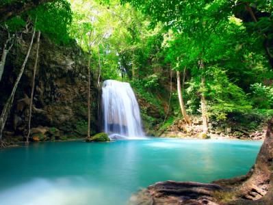 Column Vaders   Costa Rica: zwarte bonen