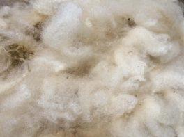 creamy woolly lovliness