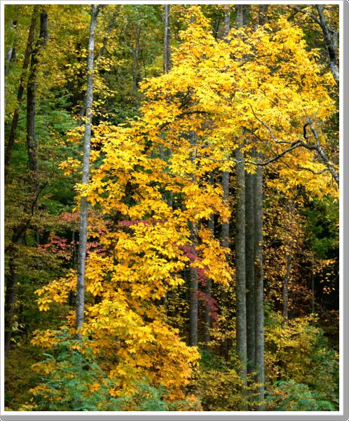 Fall at Home 4