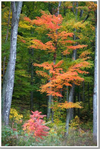 Fall at Home 7