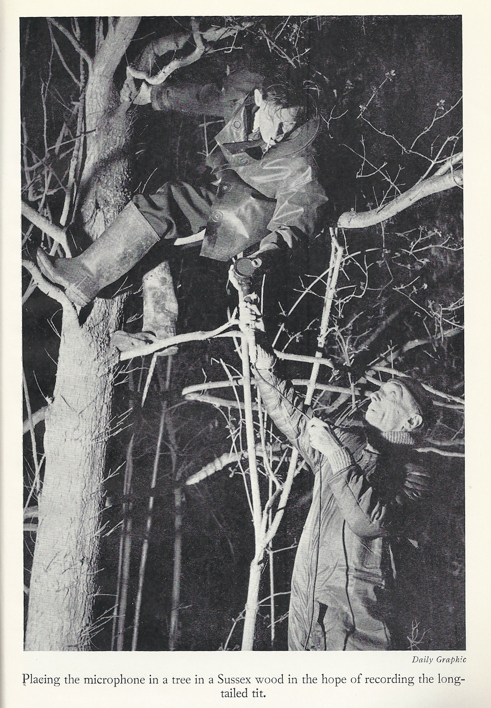 "Placing a microphone in a tree in a Sussex wood in the hope of recording the long-tailed tit (photo taken from ""Memoirs of a Birdman"" by Ludwig Koch)"