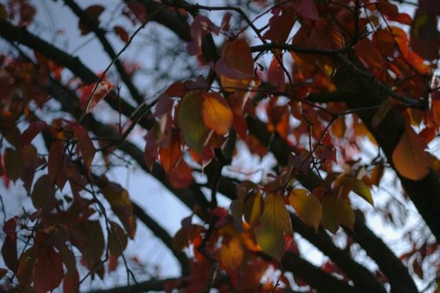 Beauteous, multi-shaded beech tree of joy!