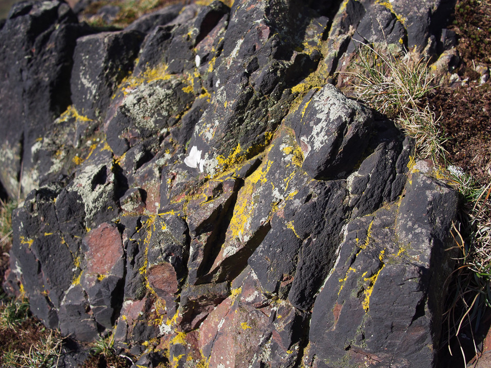 Lichens and volcanic rock, photo © Gordon Anderson