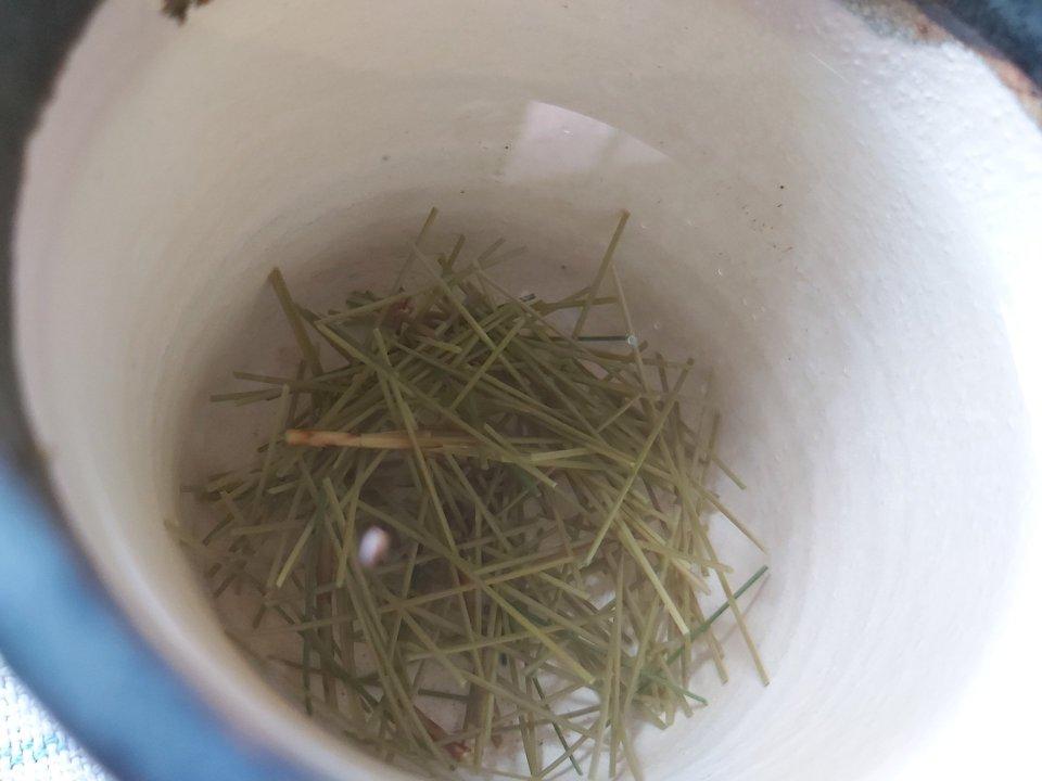 Himalayan White Pine Needle Tea