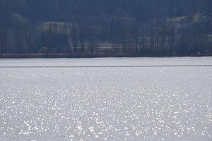 Bodensee - Radolfzell   Seehalde (28.02.2014)