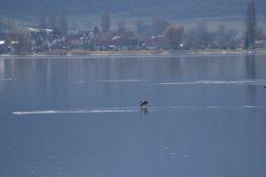 Bodensee - Radolfzell | Seehalde (28.02.2014)