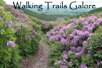 Walking-Trails