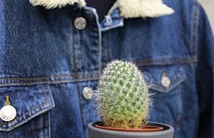 giubbotto jeans e piccolo cactus in primo piano
