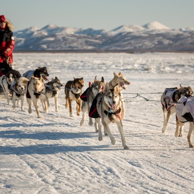 Aliy Zirkle, mushing into Unalakleet