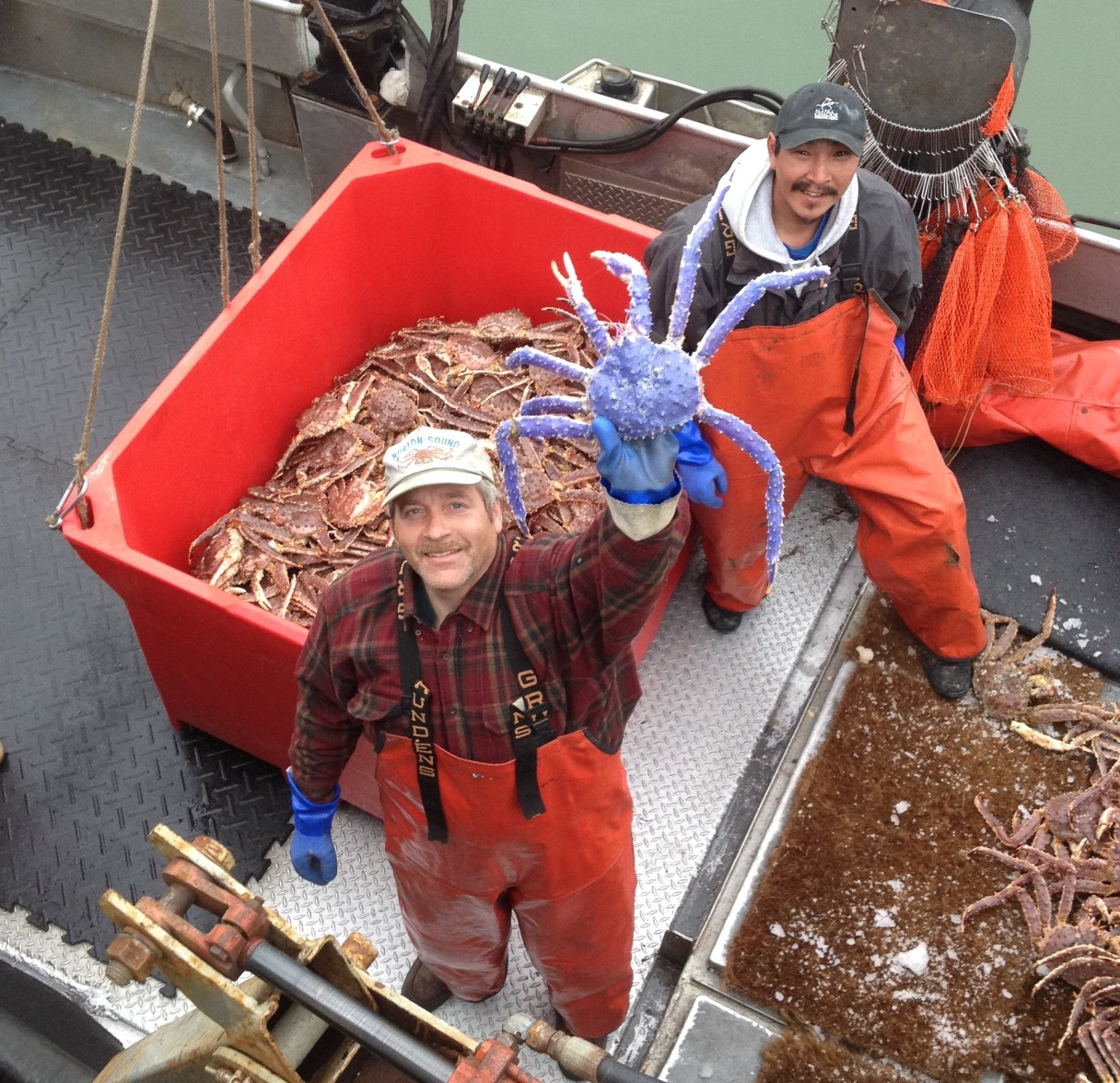 As seen in the Nome Nugget, crab fisherman Frank McFarland holds up a rare blue-colored red king crab that he caught in his commercial crabbing pots, as Frank Kavairlook Jr. looks on. Photo: Scott Kent, ADFG.
