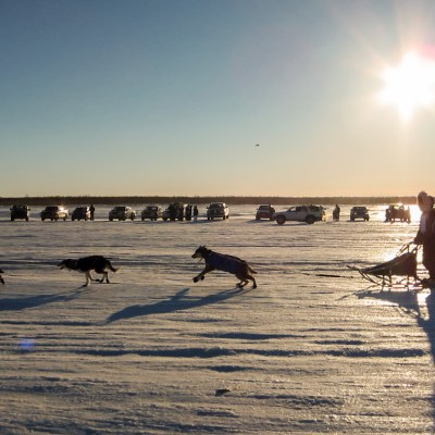 Sled dog team in Bethel, Alaska