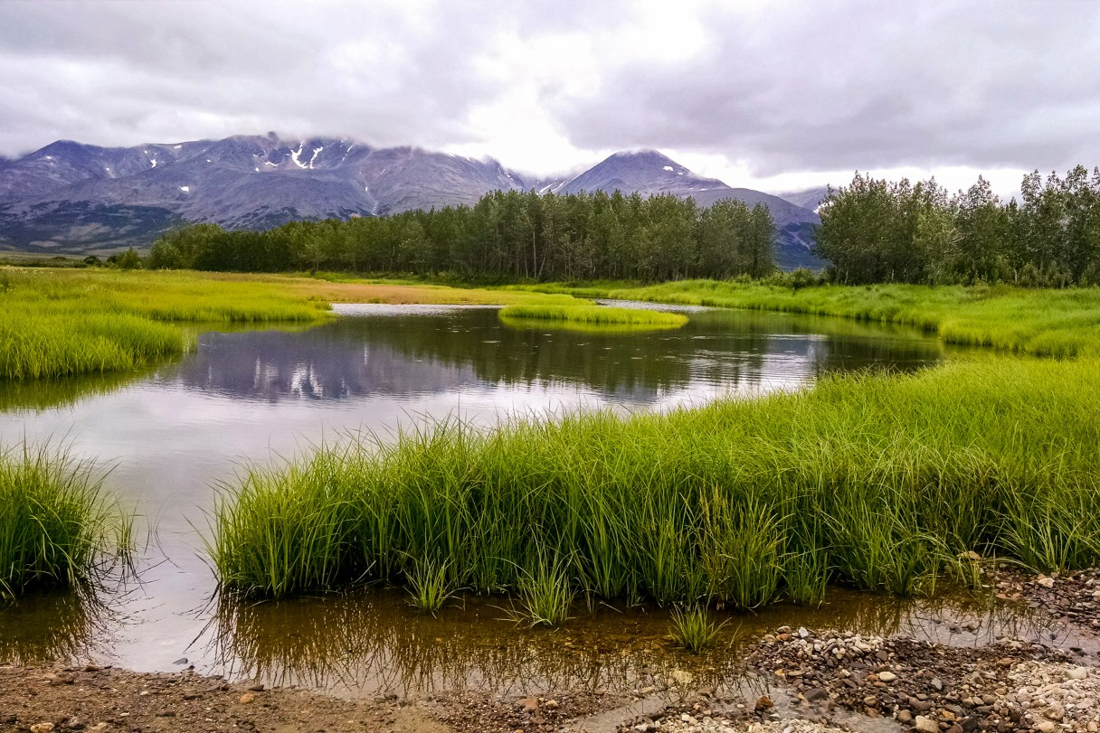 Landscape of grasses, trees, and a pond at Pilgrim Hot Springs