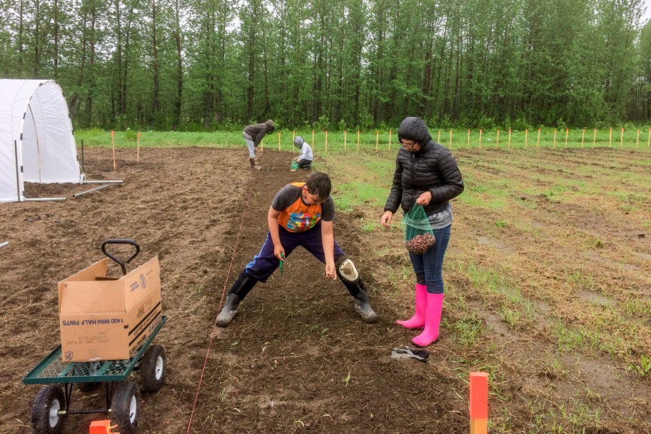 Workers plant seeds in the farming fields at Pilgrim Hot Springs.