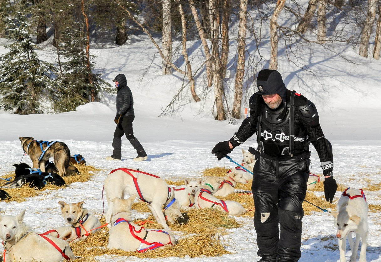 Sled dog musher walks among his team wearing protective gear.