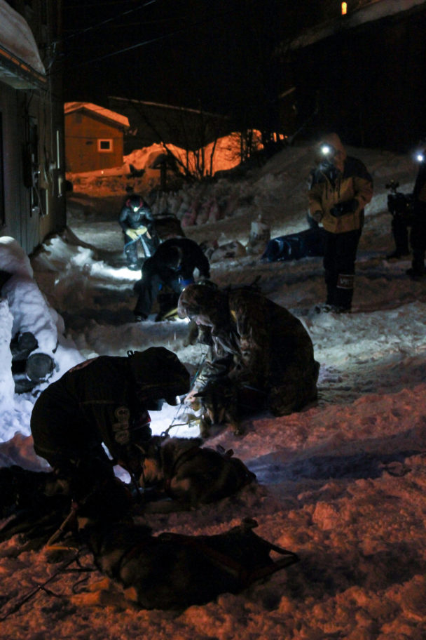 In the dark of night, veterinarians wearing headlamps examine the sled dogs of musher Mitch Seavey in the Takotna checkpoint.