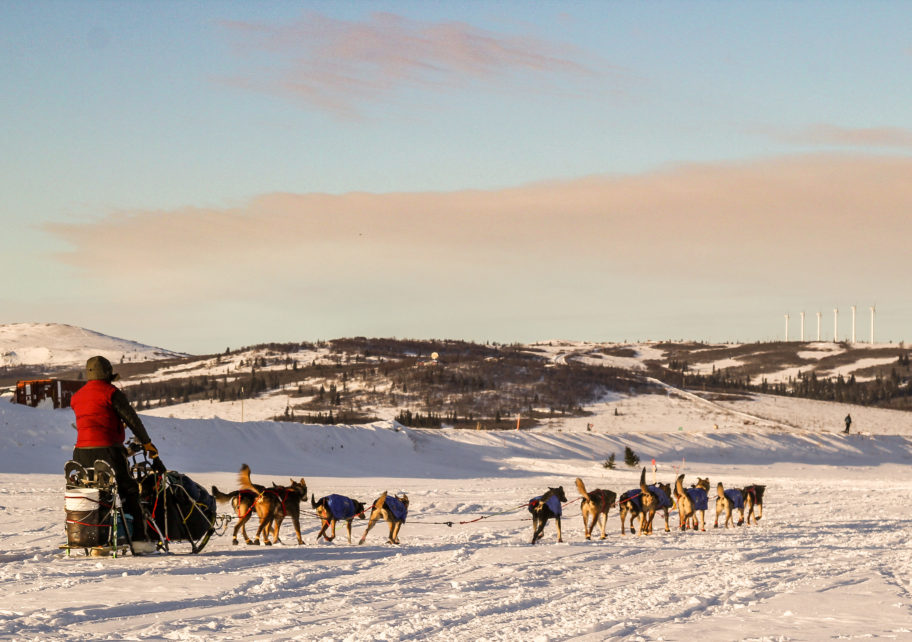 Iditarod musher leaving Unalakleet, with snowy landscape in the distance
