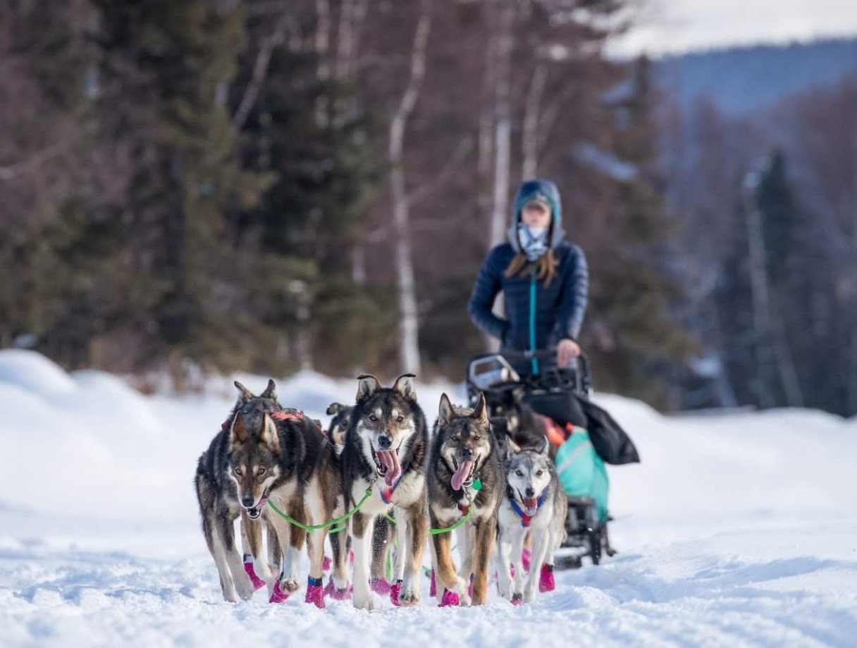 Emily Maxwell's dog team pulls her along a snowy trail.