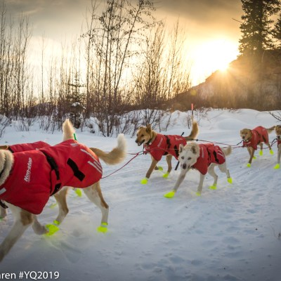Sled dogs, wearing red jackets and neon-yellow booties, mush down a snowy trail with the sun low on the horizon over mountains in the background.