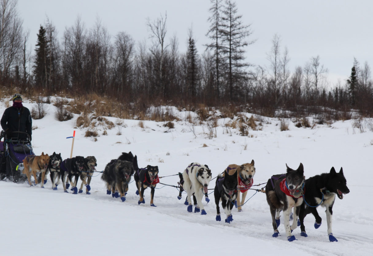 Musher with sled dog team on snowy trail amid a forest