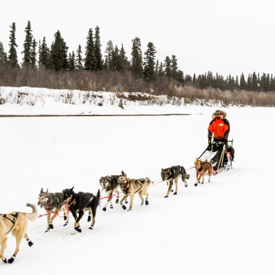 Musher in orange and black parka leads a sled dog team down a frozen river, with pine trees in the background