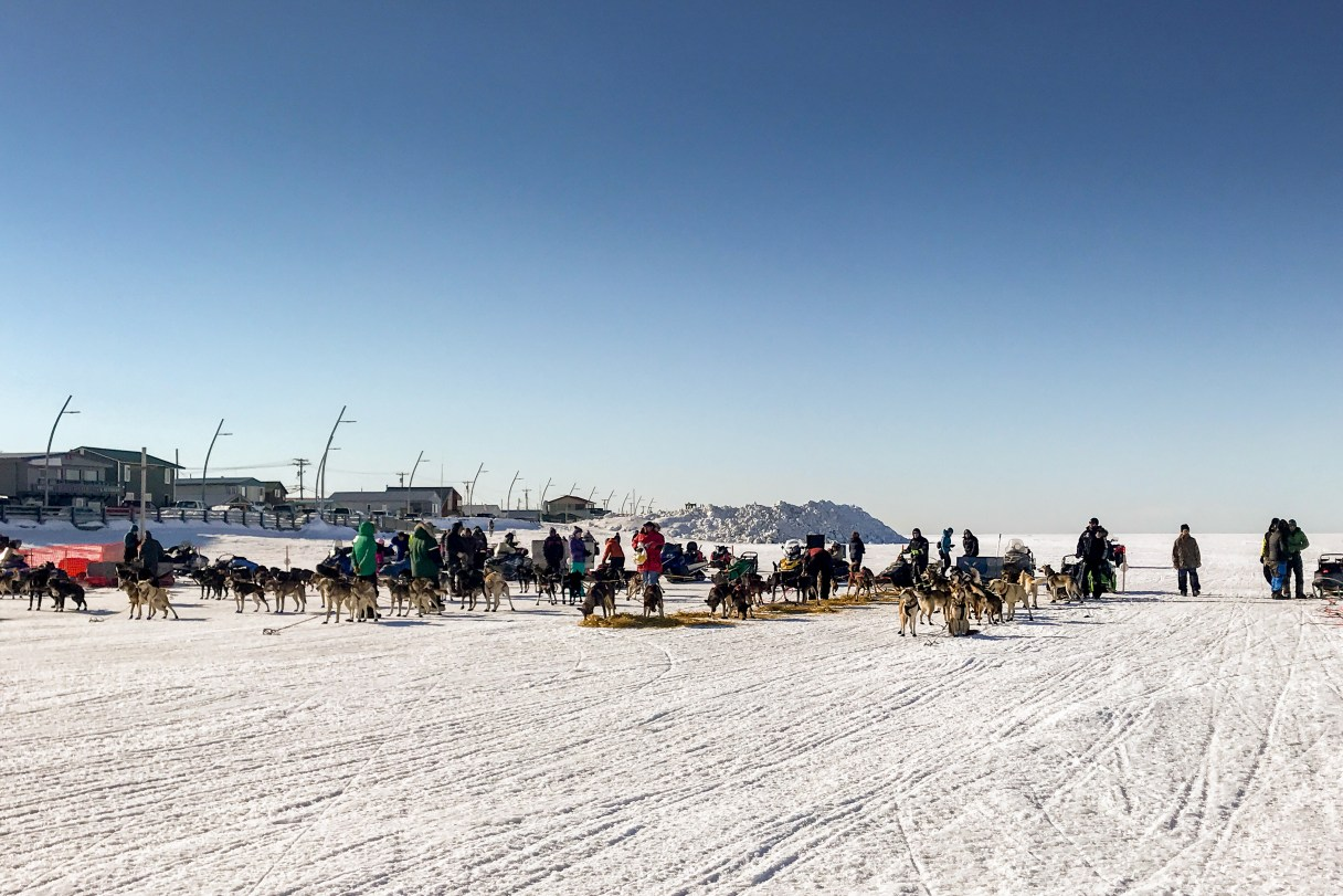 Landscape of sled dog teams lined up next to each other on a flat, snowy expanse on a clear, sunny day.