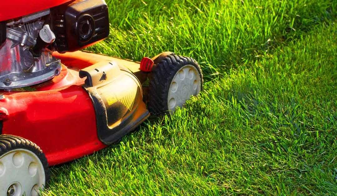 De beste grasmaaier voor het gazon kiezen