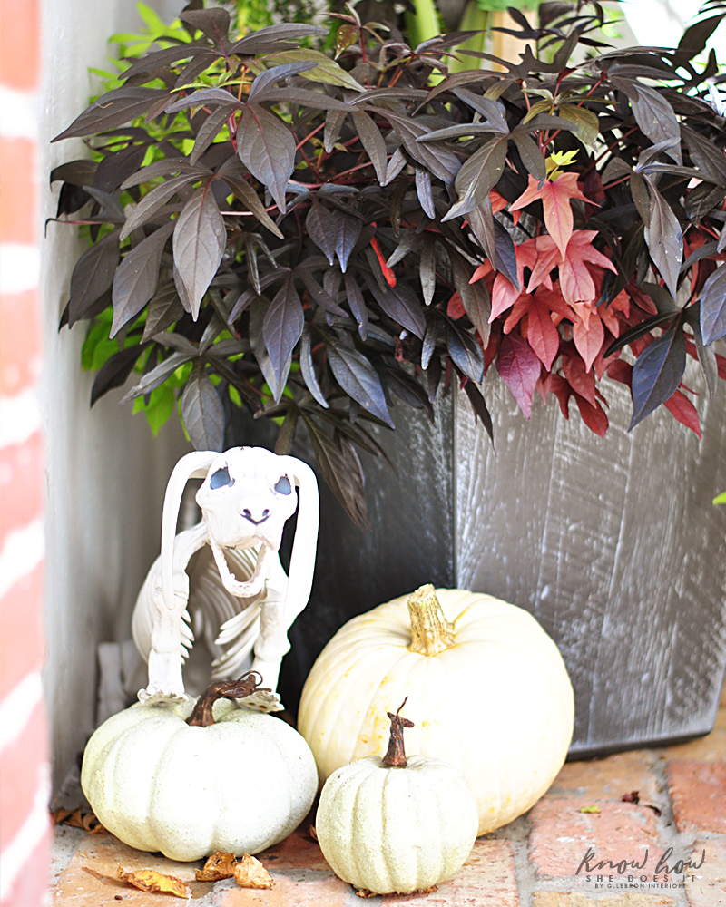 White pumpkins skeleton dog